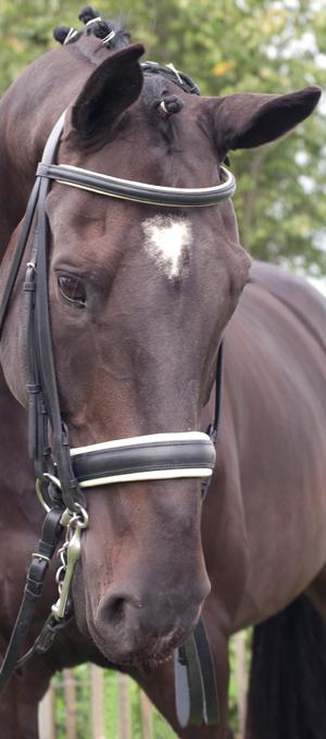 paard image